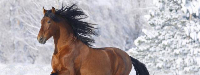 horse running through snow